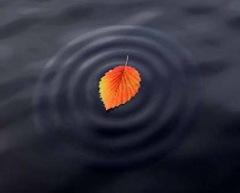 water-ripple