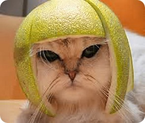 cat-helmet