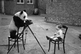 panda-photographer